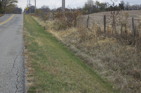 Tall grasses at edge of fence line