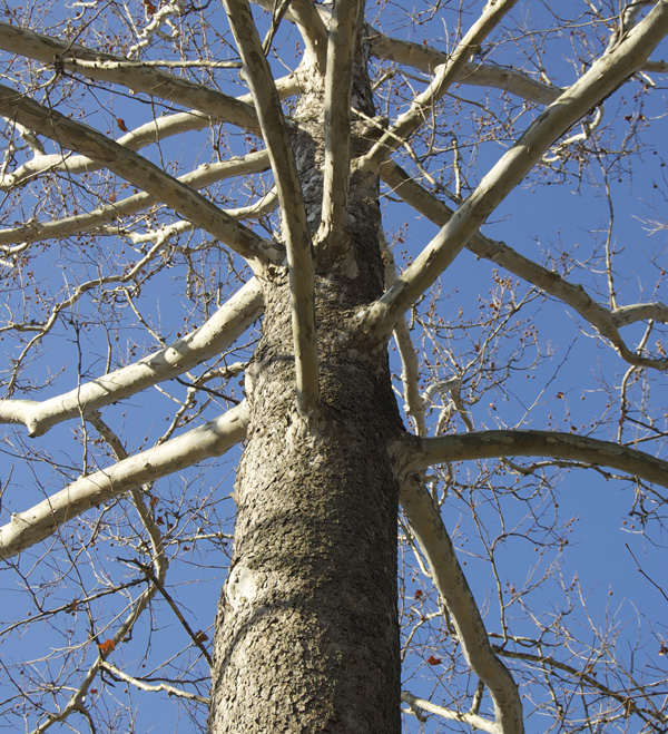 Radiating branch structure